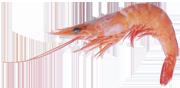 crevette-80-100